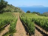 Reisekoffer mit 6 Flaschen Sommerweinen